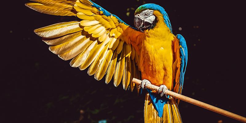 Influenzához, tüdőgyulladáshoz hasonló tüneteket okoz a papagájkór